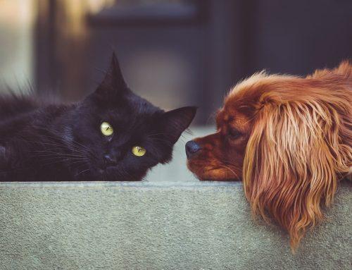 November is National Senior Pet Month!